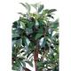Ficus bonsai en coupe
