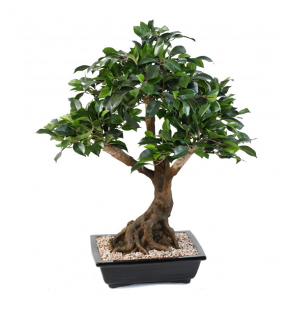 Bonsai Ficus artificiel en coupe 58 et 78cm