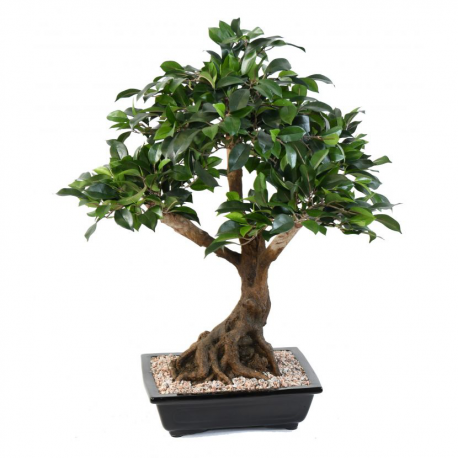 Viva verde vente et location de plantes artificielles for Plantes vertes artificielles haut de gamme