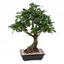 Bonsaï | Ficus artificiel en coupe 58 et 78cm