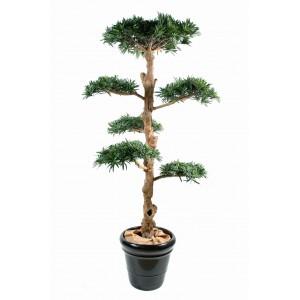 Podocarpus nuage large (150cm)