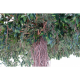 Ficus artificiel lianes Umbrella 320cm Ø450cm