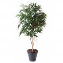 Ficus artificiel | Alii Royal 190 et 250cm