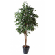 Ficus Alii Royal artificiel