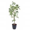Ficus artificiel | Tronc plastique 150cm