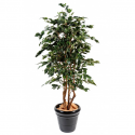 Ficus artificiel |Exotica 180 et 210cm