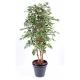 Ficus artificiel Exotica 180 et 210cm