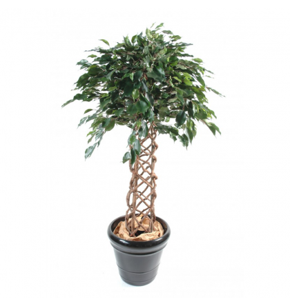 Ficus artificiel | Cage 140 et 170cm