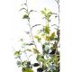 Ficus artificiel plast 180cm
