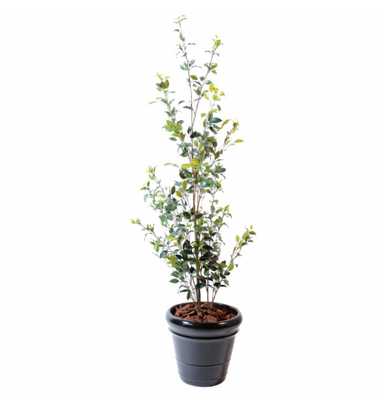 Ficus artificiel buisson plast 160cm