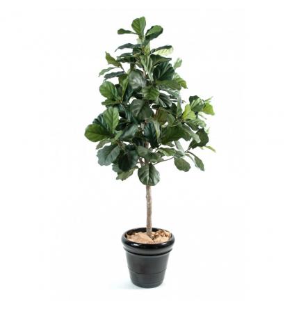 Lyrata (figuier) | Ficus artificiel 210cm
