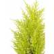 Cyprès artificiel mini Juniperus UV 55cm