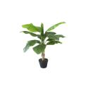 Plantes exotiques artificielles