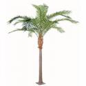 Palmiers, Plantes Tropicales